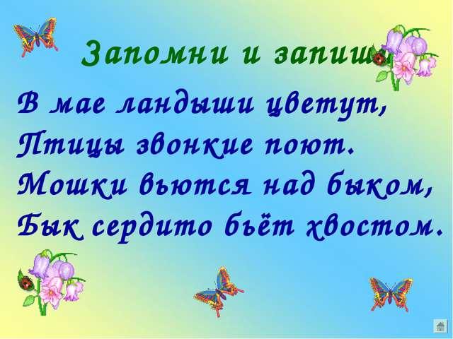 Запомни и запиши В мае ландыши цветут, Птицы звонкие поют. Мошки вьются над б...