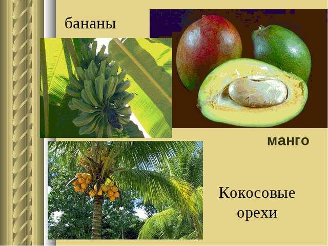 манго бананы Кокосовые орехи