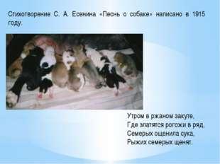 Стихотворение С. А. Есенина «Песнь о собаке» написано в 1915 году. Утром в рж