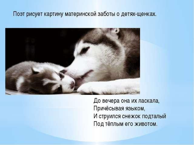 Поэт рисует картину материнской заботы о детях-щенках. До вечера она их ласк...