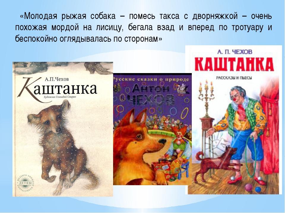 «Молодая рыжая собака – помесь такса с дворняжкой – очень похожая мордой на...