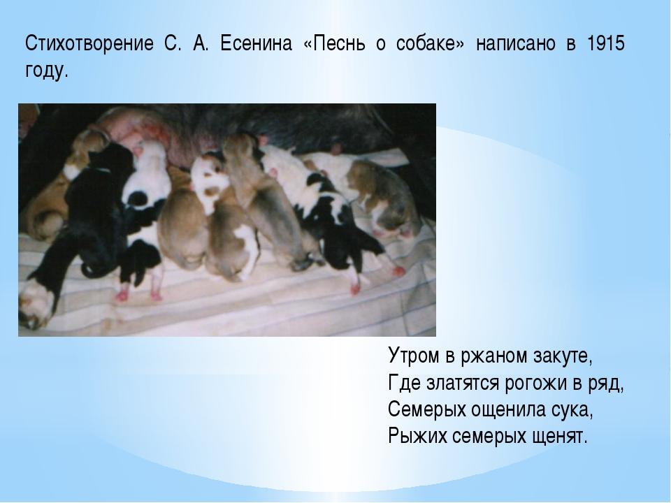 Стихотворение С. А. Есенина «Песнь о собаке» написано в 1915 году. Утром в рж...