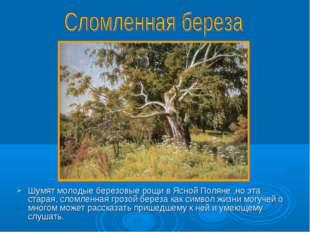 Шумят молодые березовые рощи в Ясной Поляне ,но эта старая, сломленная грозой
