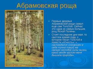 Первые деревья Абрамовской рощи сажал еще сам Толстой. Сейчас это одна из са
