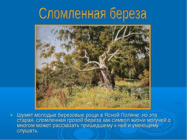 Шумят молодые березовые рощи в Ясной Поляне ,но эта старая, сломленная грозой...