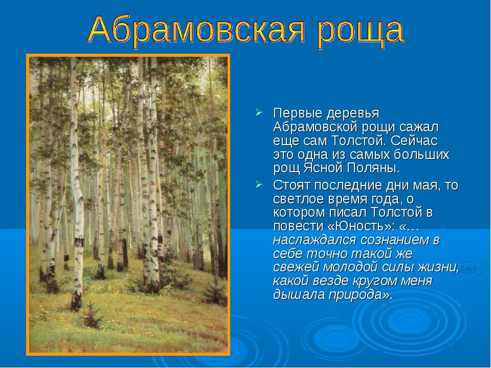 Первые деревья Абрамовской рощи сажал еще сам Толстой. Сейчас это одна из са...