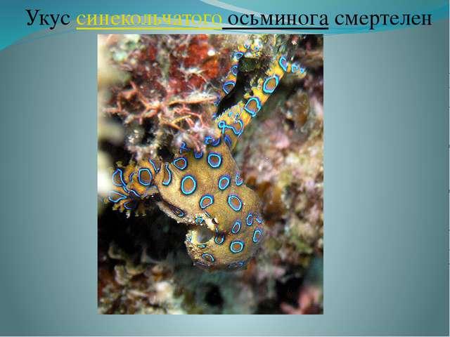 Укус синекольчатого осьминога смертелен