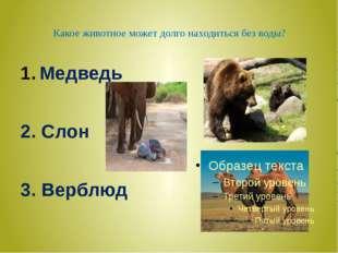 Какое животное может долго находиться без воды? Медведь 2. Слон 3. Верблюд