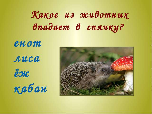 Какое из животных впадает в спячку? енот лиса ёж кабан