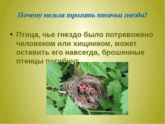 Почему нельзя трогать птичьи гнезда? Птица, чье гнездо было потревожено челов...
