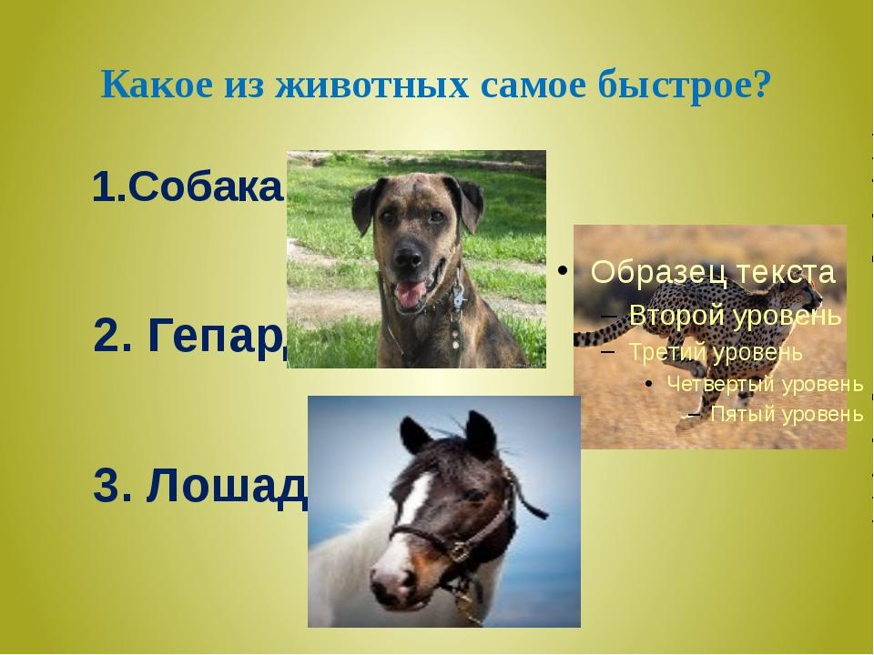 Какое из животных самое быстрое? 1.Собака 2. Гепард 3. Лошадь