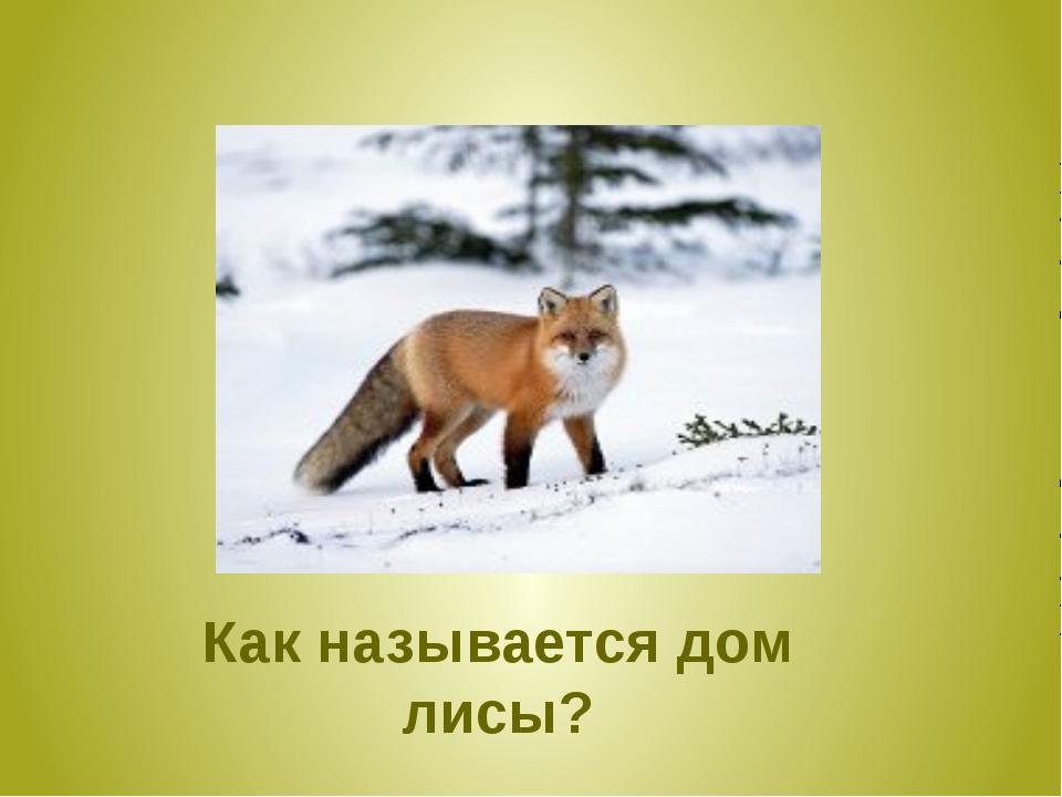 Как называется дом лисы?