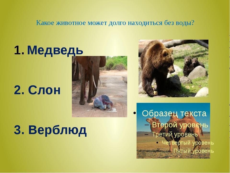 Медведь 2 слон 3 верблюд
