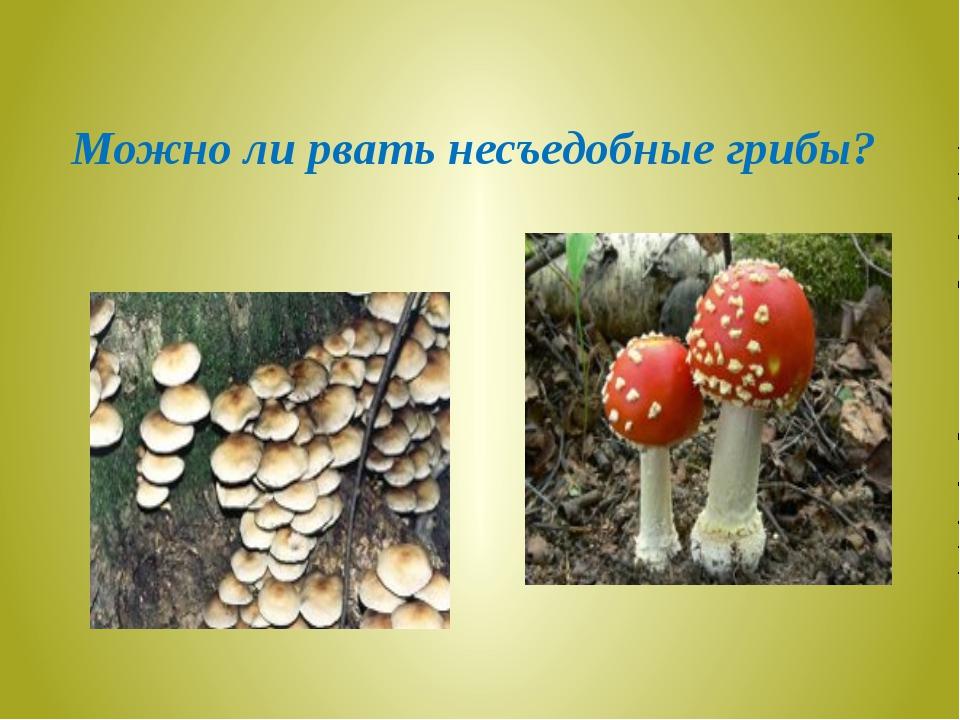 Можно ли рвать несъедобные грибы?