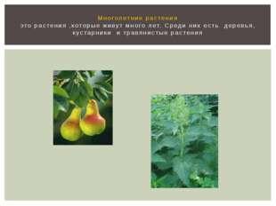 Многолетние растения это растения ,которые живут много лет. Среди них есть де