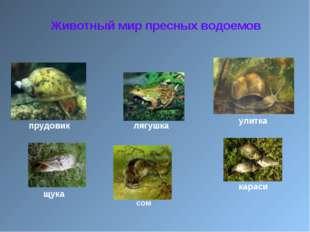 Животный мир пресных водоемов