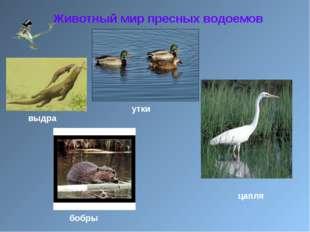 Животный мир пресных водоемов цапля утки бобры выдра