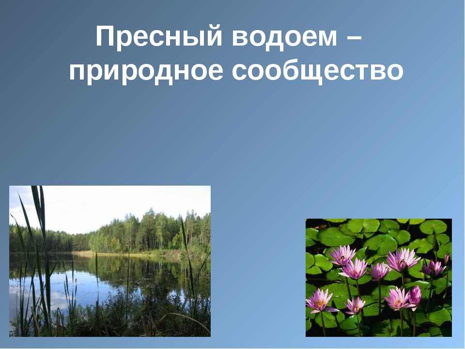 Пресный водоем – природное сообщество