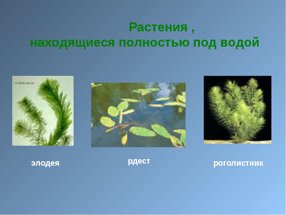 Экваториальный лес - родина многих ценных растений