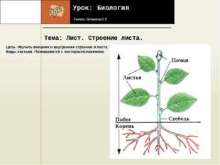 Урок: Биология Учитель: Нугманова С Е Тема: Лист. Строение листа. Название ф
