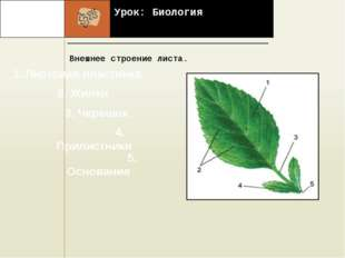Урок: Биология Внешнее строение листа. . 1. Листовая пластинка 2. Жилки 3. Ч