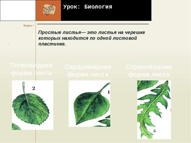 Урок: Биология Простые листья— это листья на черешке которых находится по од...