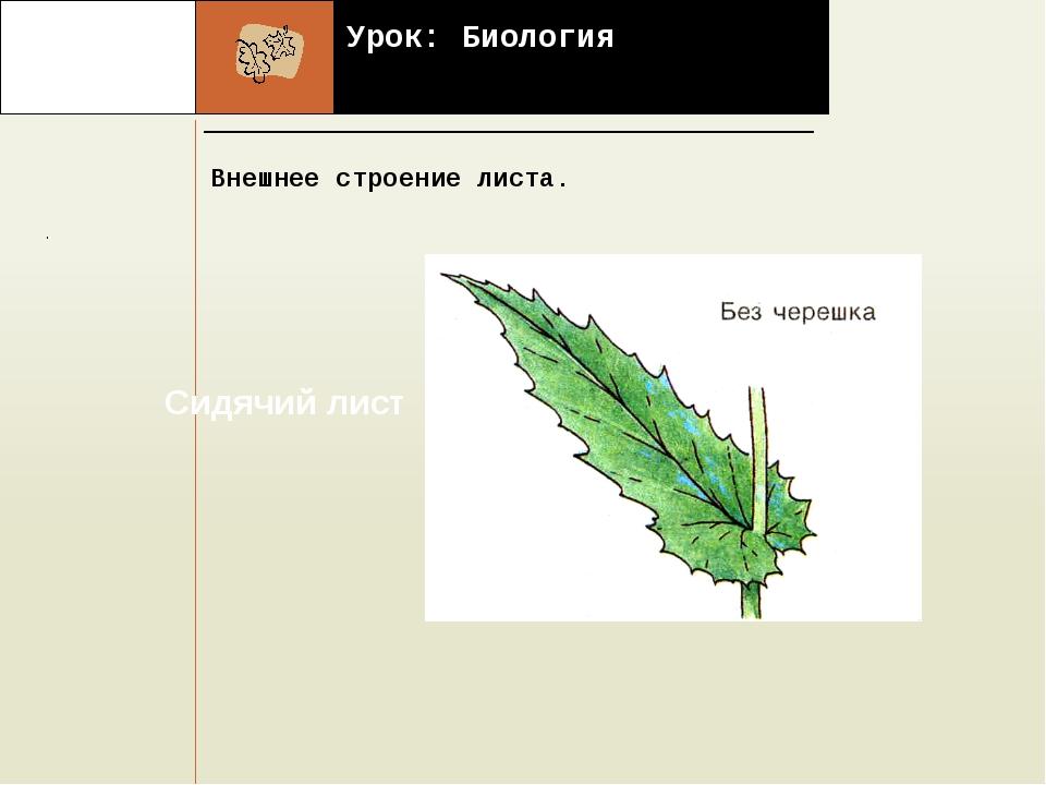 Урок: Биология Внешнее строение листа. . Наши координаты: Костанайская облас...