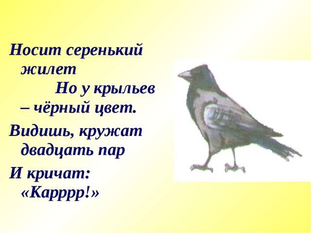 Носит серенький жилет Но у крыльев – чёрный цвет. Видишь, кружат двадцать пар...
