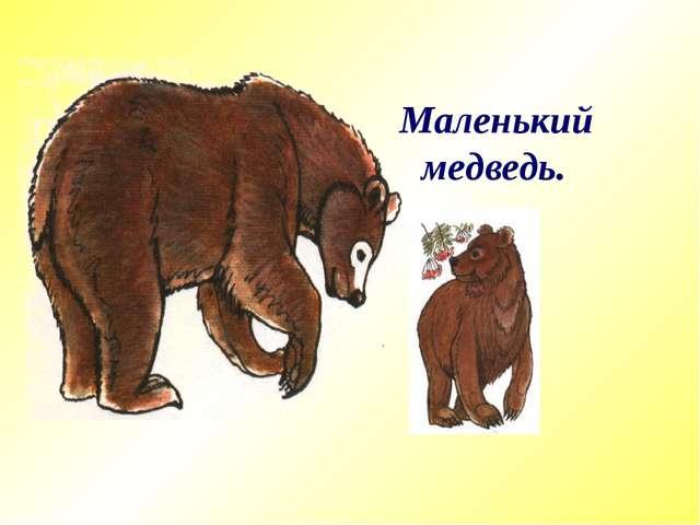 Маленький медведь.