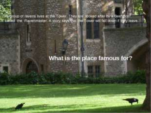 A. group of ravens lives at the Tower. They are looked after by a Beefeater c