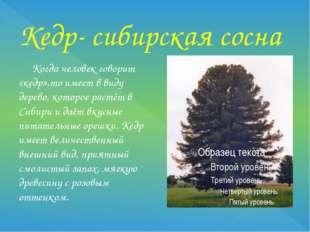 Кедр- сибирская сосна Когда человек говорит «кедр»,то имеет в виду дерево, ко