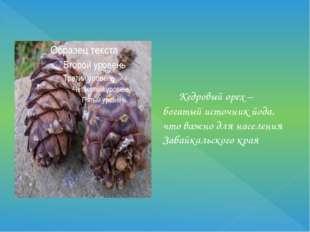 Кедровый орех – богатый источник йода, что важно для населения Забайкальског