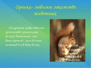 Орешки- любимое лакомство животных От урожая кедра зависит количество приноси