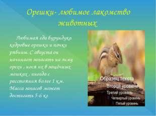 Орешки- любимое лакомство животных Любимая еда бурундука кедровые орешки и по