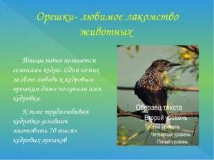 Орешки- любимое лакомство животных Птицы тоже питаются семенами кедра. Одна и