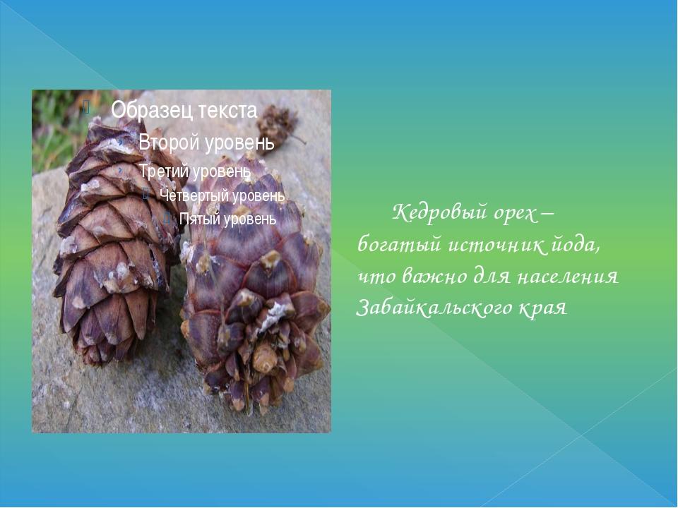 Кедровый орех – богатый источник йода, что важно для населения Забайкальског...