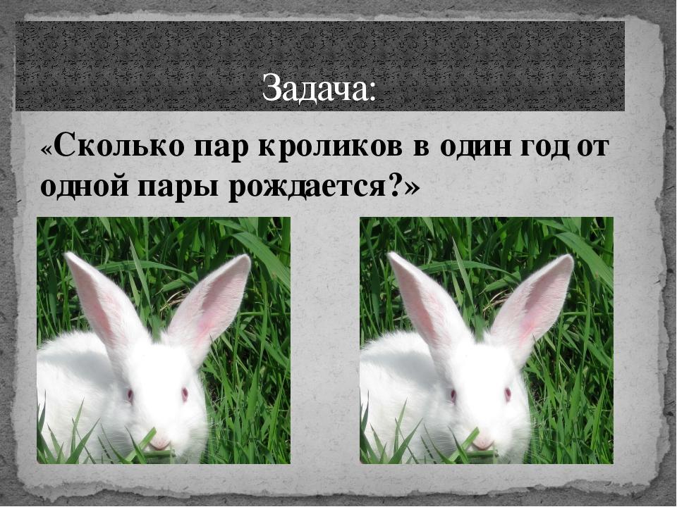 «Сколько пар кроликов в один год от одной пары рождается?» Задача: