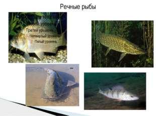 Речные рыбы Речные рыбы