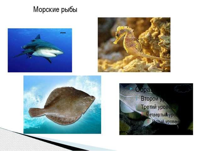 Морские рыбы Морские рыбы
