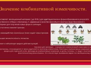 Значение комбинативной изменчивости. 1). Поставляет эволюционный материал (