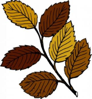 C:\Users\Администратор\Pictures\листья\herbstlaub-auf-einem-ast_17-331214413.jpg