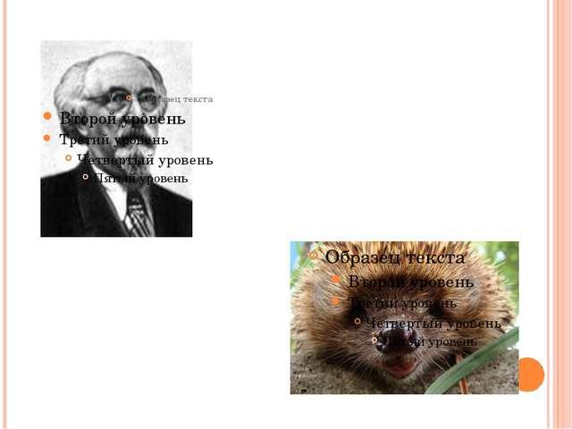 МИХАИЛ МИХАЙЛОВИЧ ПРИШВИН « ЁЖИК»