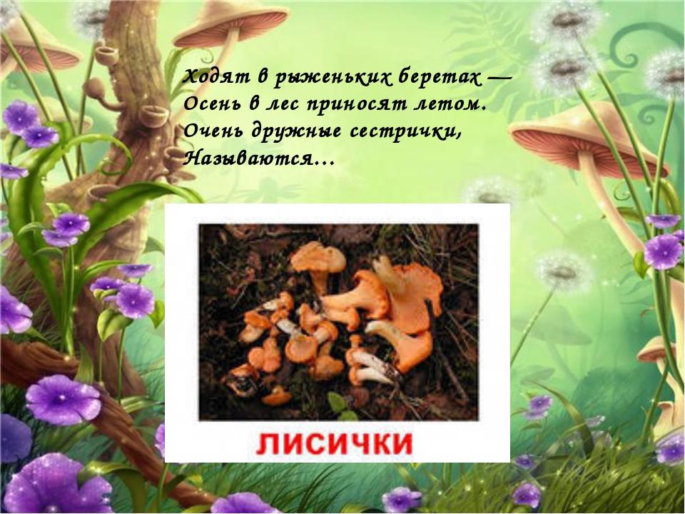 Ходят в рыженьких беретах — Осень в лес приносят летом. Очень дружные сестрич...