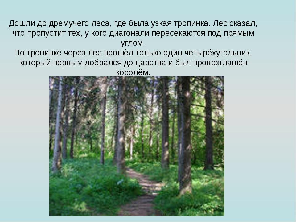 Дошли до дремучего леса, где была узкая тропинка. Лес сказал, что пропустит т...