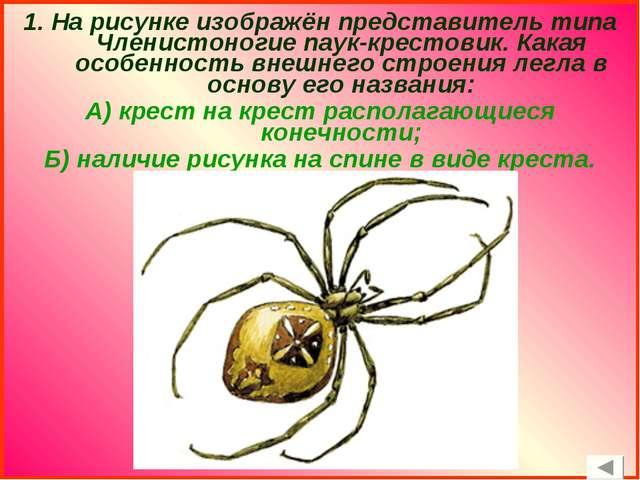 1. На рисунке изображён представитель типа Членистоногие паук-крестовик. Кака...
