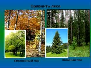 Сравнить леса Лиственный лес Хвойный лес