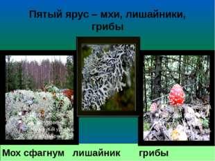 Мох сфагнум лишайник грибы Пятый ярус – мхи, лишайники, грибы