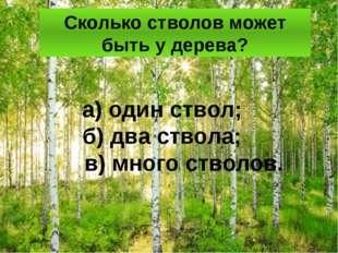 Сколько стволов может быть у дерева? а) один ствол; б) два ствола; в) много с