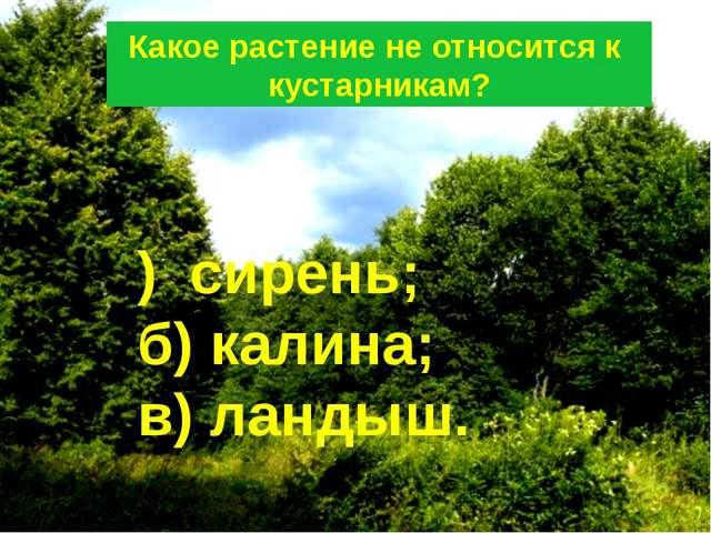 Какое растение не относится к кустарникам? ) сирень; б) калина; в) ландыш.