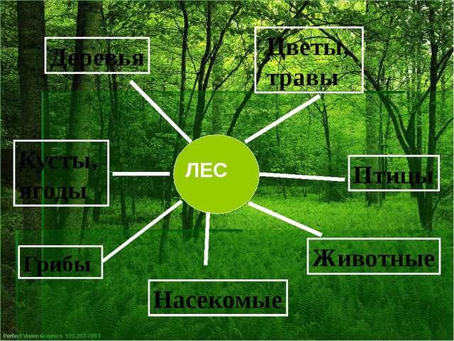 Грибы Животные Деревья Цветы, травы Насекомые Птицы Кусты, ягоды ЛЕС